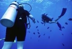 Operatori subacquei e Durgons Immagine Stock