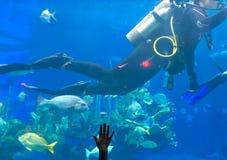 Operatori subacquei nel carro armato immagini stock
