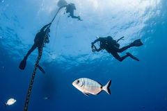 Operatori subacquei sotto la barca per tempo di deco nel blu Fotografie Stock Libere da Diritti