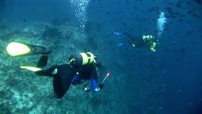 Operatori subacquei su fondo della scuola del pesce subacquea su fondale marino in Maldive video d archivio