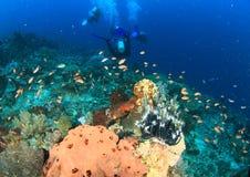 Operatori subacquei sulla barriera corallina Immagine Stock Libera da Diritti
