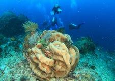 Operatori subacquei sulla barriera corallina Fotografia Stock