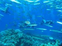 Operatori subacquei sulla scogliera Immagine Stock Libera da Diritti