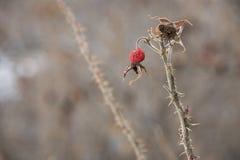Opgedroogd wild gras in de recente daling royalty-vrije stock fotografie