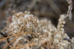 Opgedroogd wild gras in de recente daling royalty-vrije stock afbeeldingen