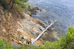 Opgedroogde dode boom op de steenkust van Royalty-vrije Stock Afbeeldingen