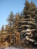 Opgeheven Huid in de Winter Stock Afbeelding