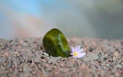 Opgepoetst groen agaat met Lithops-bloem Stock Fotografie