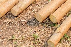 Opgestapelde boomboomstammen op rotsachtergrond Stock Foto's