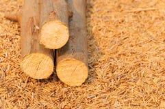 Opgestapelde boomboomstammen op schilachtergrond Stock Fotografie