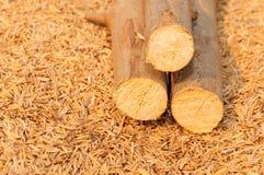 Opgestapelde boomboomstammen op schilachtergrond Royalty-vrije Stock Foto's