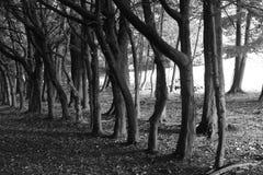 Opgestelde bomen Stock Foto's