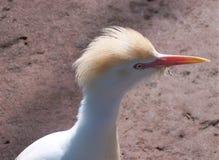 Opgewekte Vogel Royalty-vrije Stock Foto's