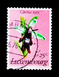 Ophrys insectifera -飞行兰花,被保护的植物serie,大约1975年 库存照片