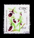 Ophrysinsectifera - vlieg orchidee, Wilde serie van Bloemendefinitives 2004-2011, circa 2005 Royalty-vrije Stock Afbeeldingen