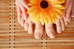 Opieka dla pięknych kobiet nóg z kwiatem piękne nogi odosobnione tła nad białą kobietą Obraz Stock