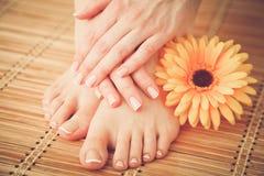 Opieka dla pięknych kobiet nóg z kwiatem piękne nogi odosobnione tła nad białą kobietą Zdjęcie Stock