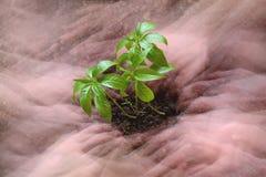 Opieka rośliny Abstrakcjonistyczne Obrazy Royalty Free