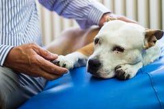 opieka Starszego mężczyzna mienia psa łapa obrazy stock