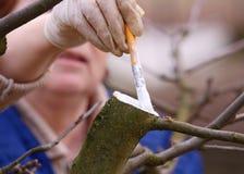 opieki drzewo Obraz Stock