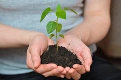 opieki pojęcia ręki target17_1_ rośliny biorą kobiet potomstwa koncepcja ekologii obrazów więcej mojego portfolio Zdjęcie Royalty Free