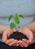 opieki pojęcia ręki target17_1_ rośliny biorą kobiet potomstwa koncepcja ekologii obrazów więcej mojego portfolio Zdjęcie Stock