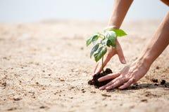 opieki roślina Fotografia Stock