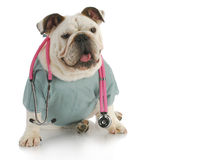opieki veterinary Obrazy Royalty Free