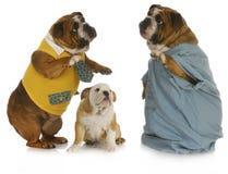 opieki veterinary Fotografia Royalty Free