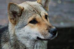 opieki zwierząt domowych bezpański Obrazy Stock