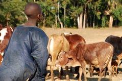Opiekun krowy - - wioska Pomerini, Tanzania, Afryka - Obraz Royalty Free