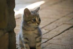 Opiekunu kot zdjęcia stock