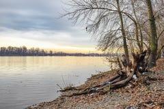 Opinião árvores e álamos de salgueiro perto do rio de Dnieper em K fotografia de stock royalty free