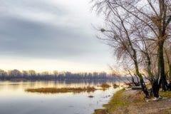 Opinião árvores e álamos de salgueiro perto do rio de Dnieper em K fotografia de stock