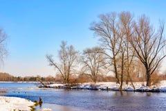 Opinião árvores e álamos de salgueiro perto do rio de Dnieper em K imagens de stock