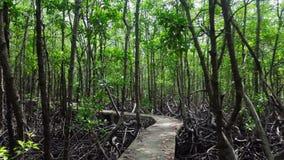 Opinião aérea da floresta dos manguezais Voo do zangão acima do trajeto concreto através das árvores com raizes grandes video estoque