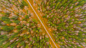 Opinião aérea da floresta no tempo do outono com bom tempo Imagens de Stock Royalty Free