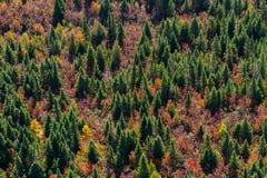 Opinião aérea da paisagem Imagens de Stock Royalty Free