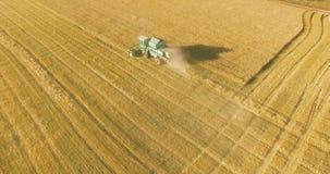 Opinião aérea de UHD 4K O baixo voo sobre a ceifeira de liga recolhe o trigo no campo rural amarelo filme