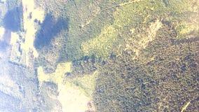 Opinião aérea do grampo vertical sobre a paisagem do verão da floresta filme