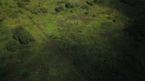 Opinião aérea do lago do verão vídeos de arquivo