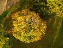 Opinião aérea do zangão folha da folha da queda/outono em uma árvore de folhosa de cima de Cores amarelas, alaranjadas, e vermelh imagem de stock