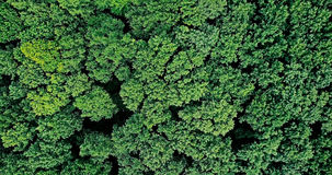 Opinião aérea do zangão Forest Trees Landscape imagem de stock