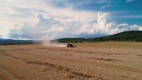 Opinião aérea do zangão na ceifeira de liga que trabalha no grande campo de trigo filme