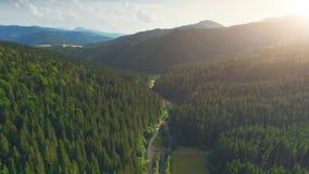 Opinião aérea do zangão: Por do sol sobre a floresta do pinheiro video estoque