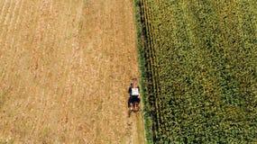Opinião aérea o fazendeiro que usa a maquinaria moderna para colher fotografia de stock