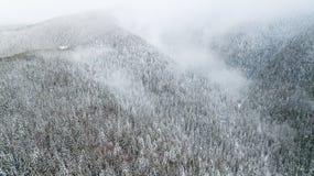 A opinião aérea o pinho coberto de neve ramifica nas montanhas fotografia de stock royalty free