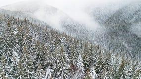 A opinião aérea o pinho coberto de neve ramifica nas montanhas imagem de stock royalty free