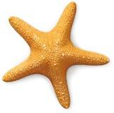 Opinião aérea um starfish do mar   Fotografia de Stock