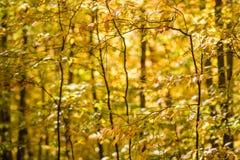 Opinião amarela da floresta na luz morna foto de stock